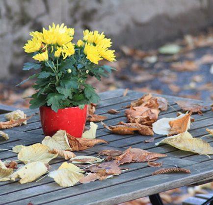 Herbst im Heidehof